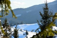 Bucovina landscape